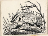 "One of nine drawings for ""Brock"" Woodland Animal and Hunters"