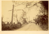 Photographs of scenes near Newport, Delaware after the cyclone of 1888