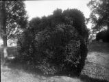 RG 1380.006 Board of Agriculture Glass Negative Collection